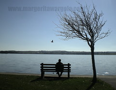 silent. (margerita wargola) Tags: blue ireland irish lake man tree bird beach water landscape niebieski lanscape woda obraz wiosna loughrea niebo drzewa irlandia krajobraz awesometrees thisphotorocks