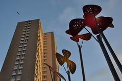 [81/365] urban growth... (werewegian) Tags: light urban sculpture flower flat glasgow growth highrise bloc day81 mar11 ruleofthirds 11322 dailyshoot werewegian day81365 3652011 2011year 365the2011edition ds492