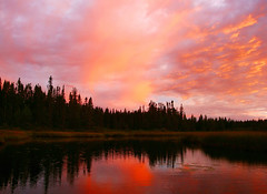 Fiery Sunset (Orion 2) Tags: trees sunset sky canada nature clouds newfoundland landscape dusk wilderness canoeing bog boreal twillight muskeg borealreds