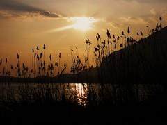 Istanti da vivere..... (fata_ci) Tags: lago tramonto natura riflessi brianza lombardia oro canneti