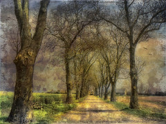 Alleyway (Bessula) Tags: tree texture nature landscape alley coth naturepoetry bessula awardtree tatot 100commentgroup platinumpeaceaward magicunicornverybest selectbestfavorites selectbestexcellence magicunicornmasterpiece sbfmasterpiece