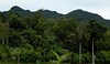 The forest at Sitio Siete (Bram Demeulemeester - Birdguiding Philippines) Tags: forest philippines mindanao lakesebu southcotobato philippinebirds bramdemeulemeester birdguidingphilippines philippinesbirdingtours