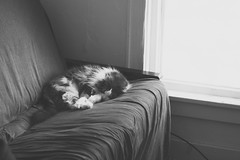 sleepy kitty. (Sarah Jane (LovelyEmberPhotography)) Tags: bw cat kitty pica