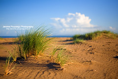Beyond The Dunes (Jerome Pouysegu) Tags: ocean voyage trip travel blue trees ireland winter sea wallpaper vacation portrait sky irish cloud mer france green art beach nature grass clouds canon photography eos 50mm bay vacances photo seaside sand europe photographie hiver dune sable sigma eire bleu ciel arbres jerome 5d wallpapers toulouse nuage nuages paysage plage fond herbe irlande baie ecran photographe irlandaise pouysegu