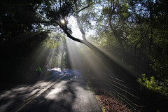Riding Through the Rays (LifeLover4) Tags: california usa mist nature bike bicycle fog forest sunrise canon outdoors oakland bay oak cyclist hiking live canyon hike cycle laurel 1022mm pinehurst huckleberry ebrpd redwoodpark efs1022mmf3545usm 550d umbellulariacalifornica t2i crepusculars ebparksok lifelover4 stickneydesign