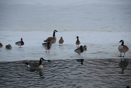 20110204-FrozenBirds-08-3.jpg