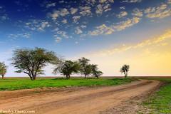 Spring Path (A.alFoudry) Tags: city blue trees winter fish flower tree green yellow clouds canon way landscape alarmed eos spring desert path mark lavender reserve line full frame slowshutter 5d kuwait fullframe shaikh sabah ef kuwaiti q8 abdullah mark2 1635mm guideline || kuw q80 q8city xnuzha alfoudry abdullahalfoudry foudryphotocom mark|| 5d|| canoneos5d|| mk|| canoneos5dmark|| canonef1635mmf28l|| f28l||