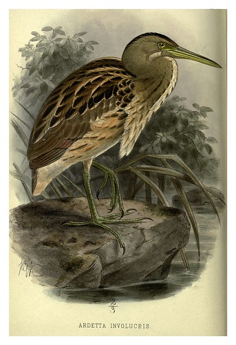 027-Garza jaspeada-Argentine ornithology…1888- William Henry Hudson y Philip Lutley Sclater