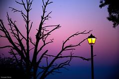 a la luz de la farola...y con un frío que te mueres (- GD photography -) Tags: light sky tree luz contraluz nikon farola cielo árbol febrero anochecer camaras tejeda cruzdetejeda 2011 d90