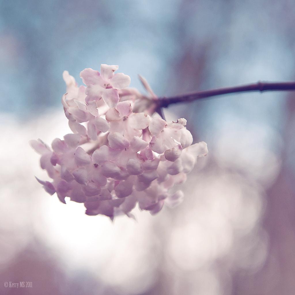 Blossoms!