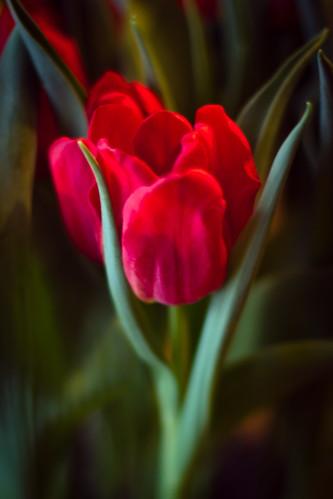 flowers-1721.jpg