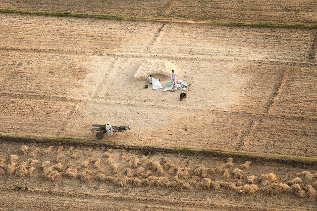 エジプト旅行 気球から見たルクソール西岸の畑