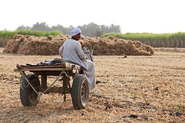 エジプト旅行 ルクソール ロバ車に乗った男性
