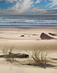 Meditation  sand dunes on the Oregon Coast (janusz l) Tags: sea christchurch beach grass oregon earthquake pray driftwood meditation prayers sanddunes florance janusz leszczynski 004425 leodery