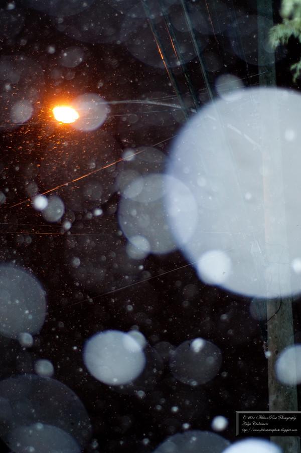 02-26-2011_snowfall_wm