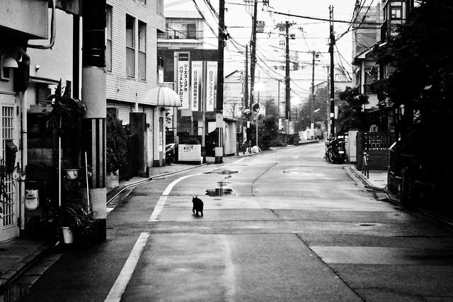 Today's Cat@2011-02-28