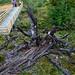 Albero morto vicino al Perito Moreno