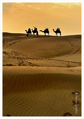 Magical Thar III(Vertical) (Abhinav Singhai) Tags: nikond90 d90 thar thardesert desert incredible incredibleindia samsanddunes sanddunes sand sunset sun camelsilhouettes silhouettes silhouette camel getty gettyvacation gettyindia lines orange travel traveller tourist touristdestination indian delhi indiatravel indiatraveller indiatourist explored