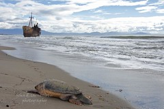 Double death (Aster-oid) Tags: mani greece seaturtle shipwrecks wrecks peloponissos glyfada gythion ff155