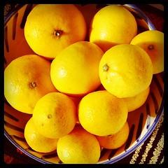 昨日買ってきたニューサマーオレンジと黄金柑。これと桜草4苗持って帰ったらちょっと腕がいたい弱虫。
