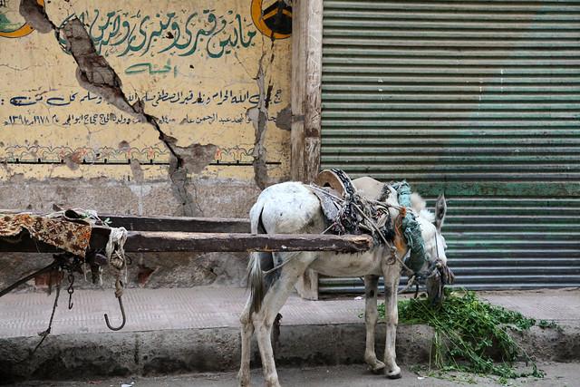 エジプト ルクソール 路地のロバ車