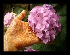 Mehndi four pink