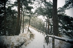 Oshima Island, Matsushima (mrlederhosen) Tags: camera travel trees winter cold film japan pinetree 35mm island ancient path freezing wideangle pines 35mmfilm meditation matsushima pinetrees pathway oshima buddhistretreat honshu superheadz oshimaisland superfatlens kumagin wideanglecamera meditationisland