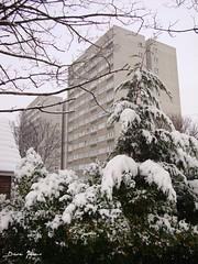Dudeney & Nettleton 1 (brightondj) Tags: uk winter snow brighton flats pines pointandshoot towerblock compact councilflats davejones hollingdean sonydscw210 £100camera dudeneynettleton