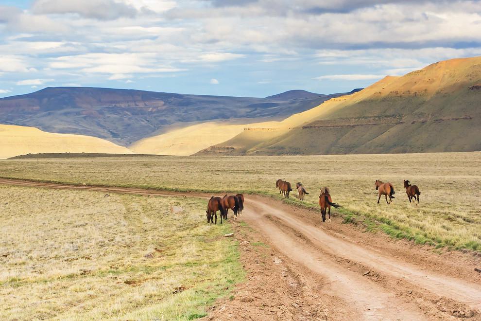 La estepa, un territorio llano y extenso, árido y extremo. Sólo corren el viento y los caballos. (Guillermo Morales -  Patagonia, Argentina)