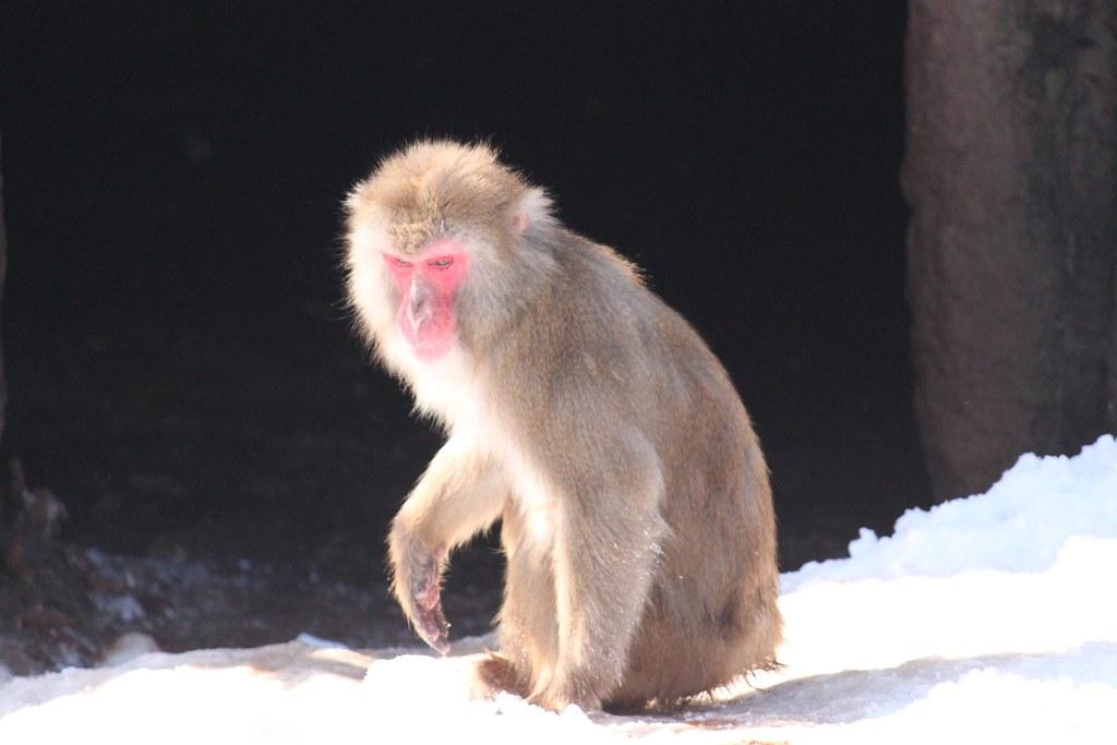 Sapporo Maruyama Zoo (7)