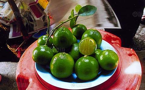 การปลูกมะนาวลูกดก Citrus Tree Lemon