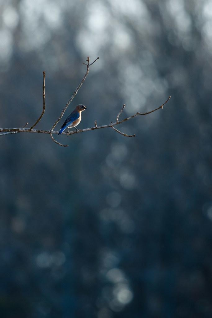 Bluebird; blue world