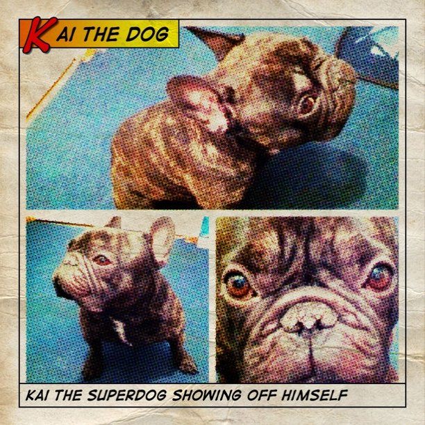 Kai the superdog