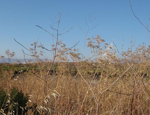 2. Tall grass