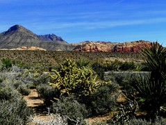 Colorful Red Rock Canyon (Butch Osborne) Tags: redrockcanyon camera usa digital america landscape lumix photography nationalpark amazing desert lasvegas nevada bluesky canyon panasonic explore wildwest dmc mustsee fz50 explored madeexplore panasonicdmcfz50 panasoniclumixdmcfz50
