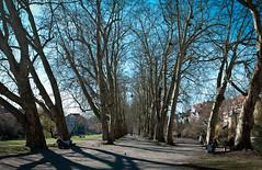 Neckarinsel (dirrch) Tags: panorama tbingen hugin neckarinsel