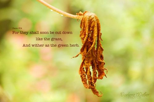 Psalm 37:2