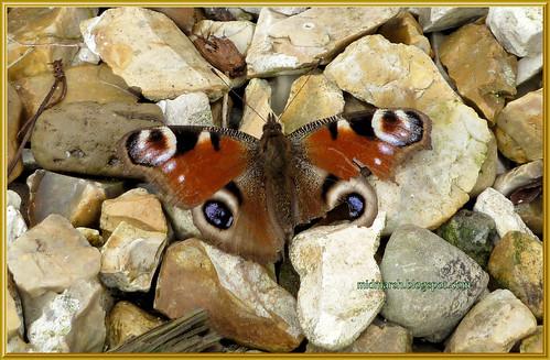First Flutter