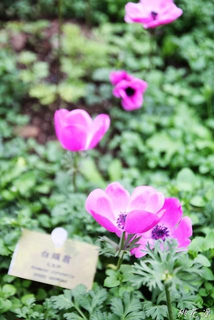 2011/03/19 南投~桃花源(一) ^ ^