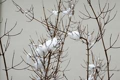 (Victor Miranda Pretel) Tags: winter snow color colour nikon nieve invierno nikkor brach ramas d80