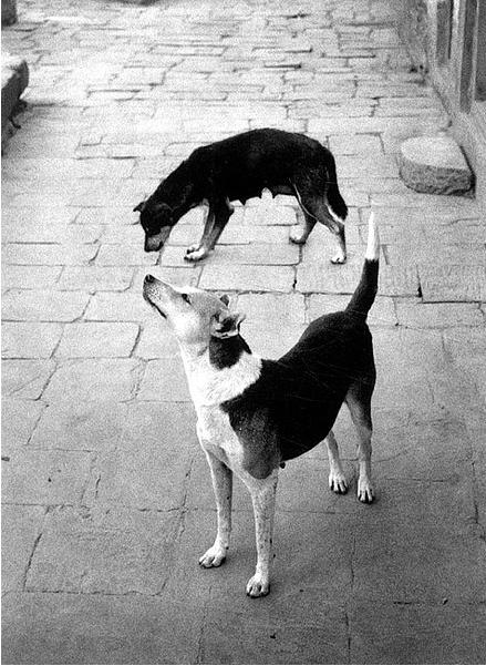 Pentti Sammallahti, Swayambhunath, Nepal, 1994