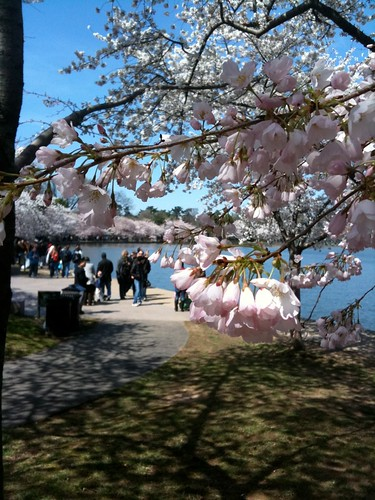 Crowds at National Cherry Blossom Festival in Washington D.C.