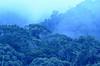 Forest at Mount Kitanglad (Bram Demeulemeester - Birdguiding Philippines) Tags: forest rainforest philippines mindanao bukidnon philippineeagle bramdemeulemeester mountkitanglad birdguidingphilippines philippinesbirdingtours