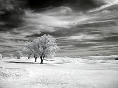 Whoosh (zachstern) Tags: trees wallpaper sky white tree field clouds landscape ir infrared         s30ir2