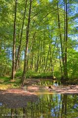 Aulnaie-saulaie, Lac de Warfaaz, Spa, BELGIUM (brun@x - Africa: birds & more) Tags: 2016 fort forest aulnaie saulaie spa warfaaz riperine ripicole bruno portier brunoportier belgique belgium nikon d7000 nature natuur hdr alnus salix