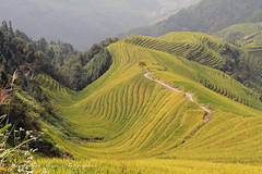 Long Ji Rice Terrace in Guang Xi, China. (jmboyer) Tags: chi1162 pingan chine china asie asia jmboyer travel voyage shanxi guangxi yahoo go imagesgoogle photoyahoo photogo lonely gettyimages picture nationalgeographie longjiriceterraceinguang landscapes lonelyplanet