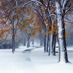 First Snowfall 1 of 2 (Gerry Marchand) Tags: olympus omd em5 saskatoon saskatchewan canada snow winter cold trees brilliant