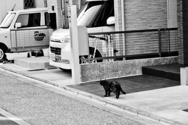 Today's Cat@2011-01-26