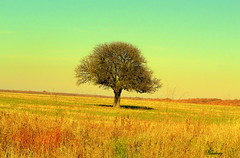 Are you lonesome tonight? (Harlory) Tags: color tree lonely lonesome
