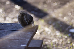 Are You There Squirrel?  It's Me, God. (ethics_gradient) Tags: ltm light canon tampa rodent squirrel florida god sony 100mm adapter flare f2 artifact picnictable leicascrewmount leicathreadmount nex3
